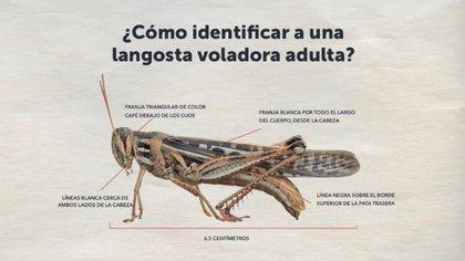 (Foto: Twitter Pablo Salvador Anliker Infante, Ministro de Agricultura de El Salvador)